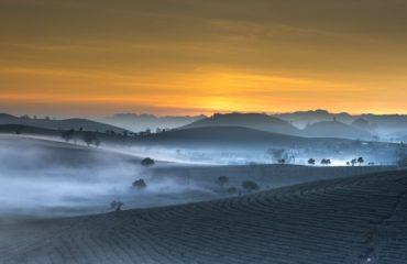 Plantación de té azul